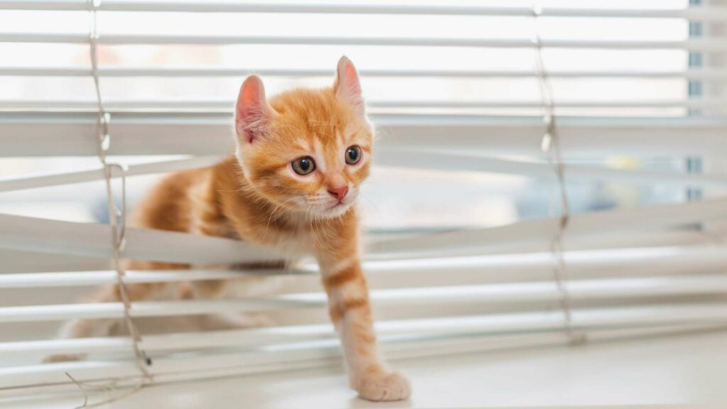 Jak przygotować dom do przyjęcia kota