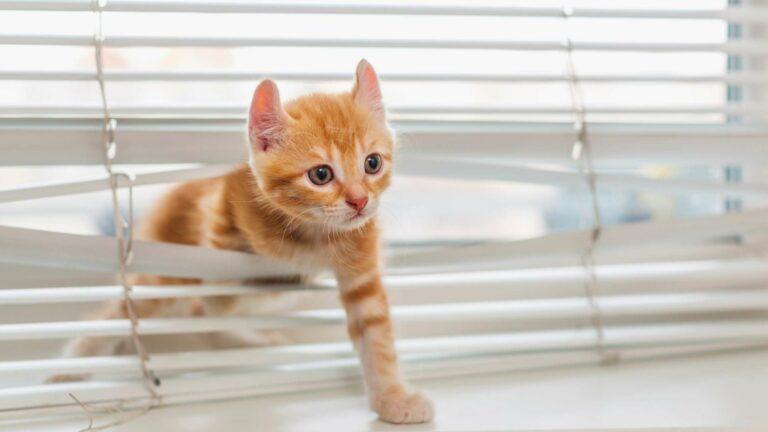 Jak przygotować dom doprzyjęcia kota