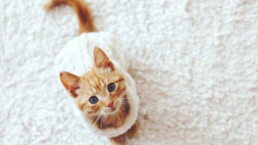 Wyprawka dla małego kotka