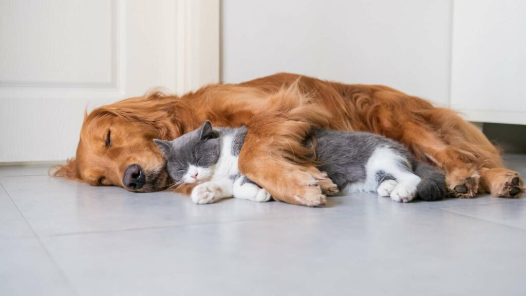 Kot czy pies?