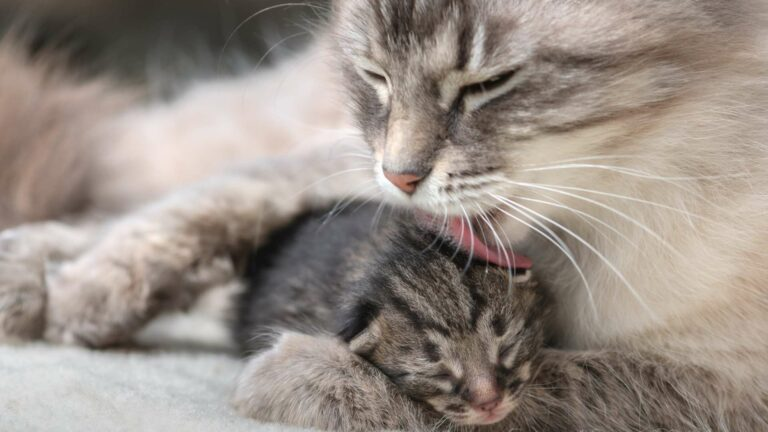 Kociak czydorosły kot