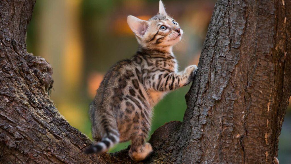 Kot wychodzący czy niewychodzący