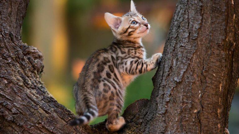 Kot wychodzący czyniewychodzący